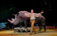 Portugalsko zakáže využívání až 40 druhů zvířat v cirkusech