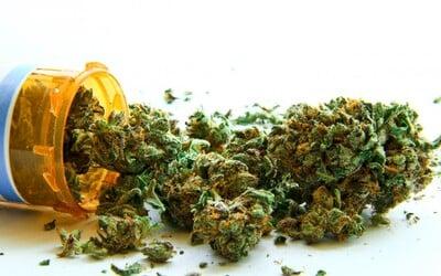 Poslanci v Německu schválili legalizaci marihuany pro lékařské účely