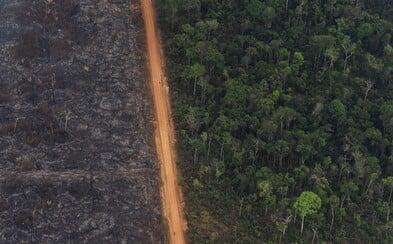 Požáry v amazonském pralese nejsou jen o hovězím mase a veganství. I používání smartphonu ničí pralesy