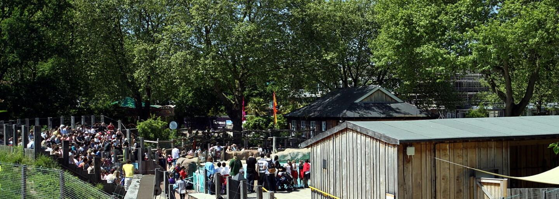Pracovníci Londýnskej zoologickej záhrady zhodili všetko oblečenie a pracovali nahí, aby vyzbierali peniaze pre ohrozené tigre