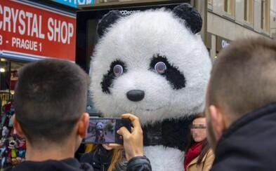 Praha zakáže zvířecí kostýmy v centru. Nejsou uměním a narušují vzhled města
