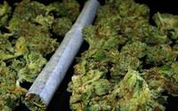 Pravidelné požívanie marihuany vedie ku zvýšenej aktivite niektorých oblastí mozgu a spôsobuje chaotickejšie myslenie