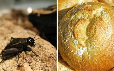 Pre Fínov je už obyčajný chlieb nuda. Začali doň pridávať sušené cvrčky