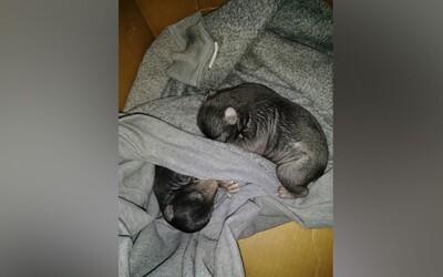 Pred domom si našiel krabicu so šteniatkami. Boli to ale malé medvede a mal šťastie, že na blízku nebola ich matka
