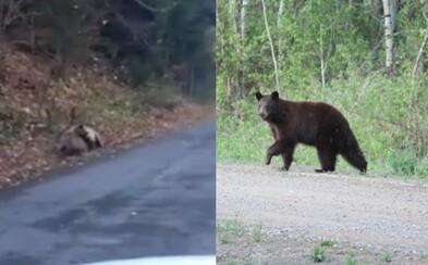 Pri Kremnici šofér natočil súboj medveďa s jeleňom. Video, aké si snáď ešte nikdy nevidel, vyvoláva rozporuplné reakcie