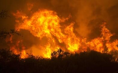 Při požárech v Bolívii zemřely více než 2 miliony zvířat. Oheň pohltil přes 4 miliony hektarů lesa