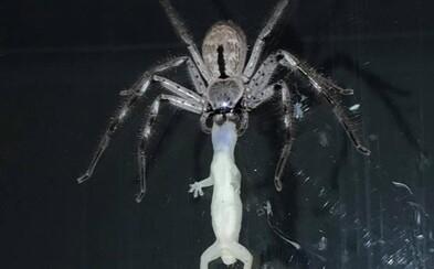 Pri večeri robil zaľúbencom spoločnosť obrovský pavúk, ktorý sa tiež rozhodol hodovať. Z úst mu visela roztomilá jašterička