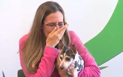 Príbeh ako z rozprávky. Pes sa našiel po 12-tich rokoch stovky kilometrov od domova, k majiteľke sa dostal len vďaka mikročipu