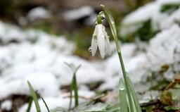 Prichádza jar? Na niektorých častiach Slovenska sa oteplí až na 13 stupňov Celzia