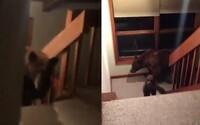 Prišiel domov a v kuchyni ho čakala medvedica s mláďatami. Nebolo mu všetko jedno, keď ho začala naháňať po schodoch