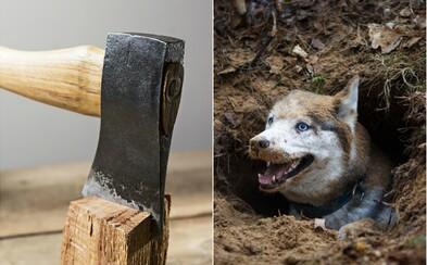 Proč pijeme na sekyru a ptáme se, v čem je zakopaný pes? Zjisti, odkud pochází zdánlivě nesmyslná česká úsloví