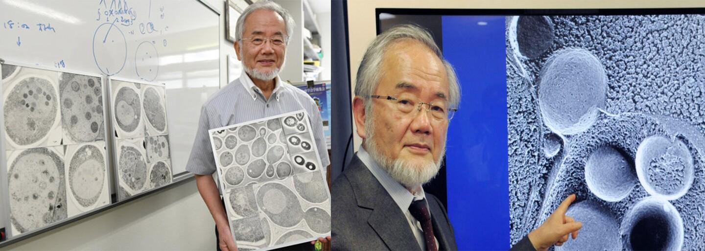 Prvú Nobelovu cenu dnes získal japonský vedec Jošinori Ohsumi. Ozrejmil proces, ako sa bunky opravujú