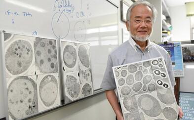 První Nobelovu cenu dnes získal japonský vědec Jošinori Ohsumi. Objasnil proces, jak se buňky opravují