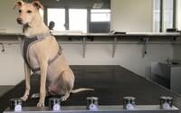 Psi zjistí nakažení koronavirem dřív než test. Na letišti ve Finsku budou kontrolovat pasažéry