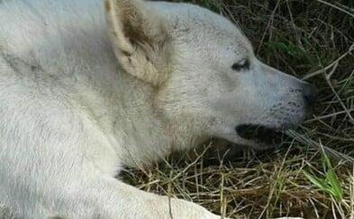 Psa usmrtil elektrický proud, když zachraňoval svého majitele. Zahryzl se do kabelu a tahal až do posledních sil