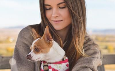 Psy rozpoznajú smútok a urobia všetko pre to, aby svojich majiteľov rozveselili