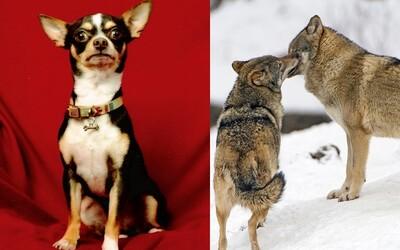 Psy sa dokážu uraziť na život a na smrť. Štúdia ukázala odvrátenú tvár domácich miláčikov