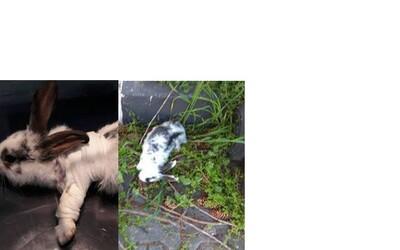 Psychopati v Bratislave na verejnosti týrajú králikov. Pomôžme nájsť monštrá, ktoré nevinné zvieratá kopú aj mlátia o zem