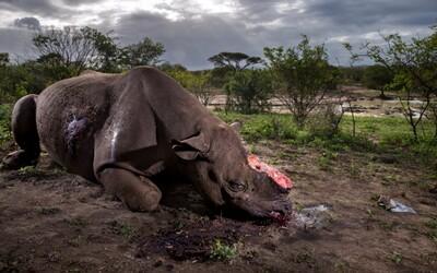 Pytláky v Keni zřejmě čeká trest smrti