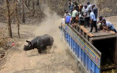 Pytliaci bezcitne zastrelili nosorožca priamo pod nosom turistov. Vytrhli mu roh a nechali ho ležať v kaluži krvi