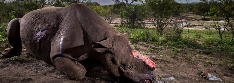 Pytliakov v Keni zrejme čaká trest smrti. Krajine už s vrahmi zvierat došla trpezlivosť