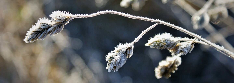 Ranní mrazíky, přeháňky a vítr. Česko zažije jarní počasí, které nebude vyhovovat úrodě, varuje ČHMÚ