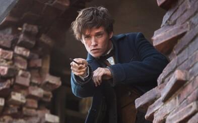 Redmaynov Newt Scamander nebude hlavnou postavou pokračovaní Fantastických zverov. Zameria sa príbeh na Dumbledora?