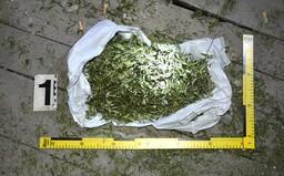 Riaditeľ Centra pre liečbu drogových závislostí: Mladí Slováci v lete častejšie fajčia marihuanu, boháči neodolajú kokaínu
