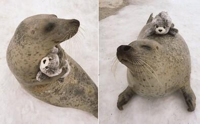 Roztomilý tuleň sa zoznámil so svojou plyšovou verziou. Zmenšeninu si nevedel dostatočne vyobjímať