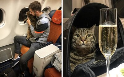 Ruská mačka bola príliš tučná. Jej majiteľ preto zohnal dvojníka, aby ju dostal do lietadla