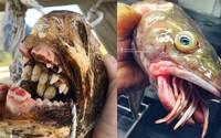 """Ruský rybář fotografuje """"podmořské příšery"""". Na Instagramu má statisíce followerů"""