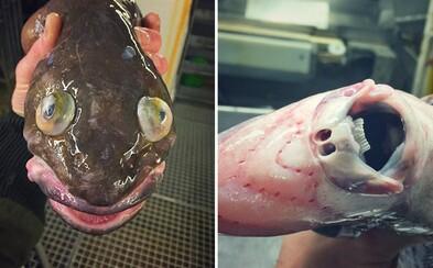 Ruský rybář Roman vytahuje z mořských hlubin ta nejbizarnější stvoření. Na svém Twitteru je sdílí s celým světem