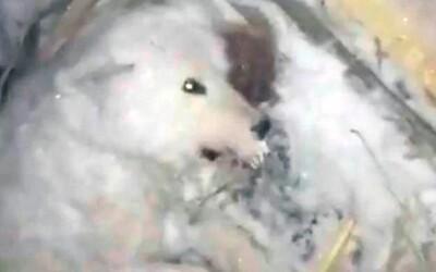 Ruský tyran polial psa ľadovou vodou a nechal ho zamrznúť. -32 stupňov a najchladnejšie mesto sveta zmenili psa na kocku ľadu