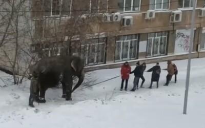 Ruským Jekaterinburgom sa prechádzali dva slony. Vraj sa tešili zo snehu