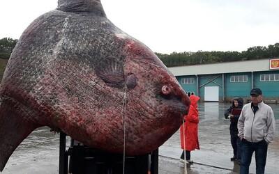 Ruští rybáři chytili obrovskou a vzácnou tunovou rybu. Namísto toho, aby měsíčníka zachránili, ho předhodili medvědům