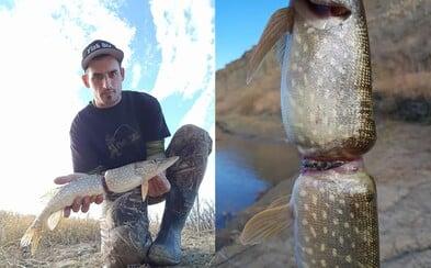 Ryba, která vyrostla v plastovém kroužku. Vplout do něj musela jako mládě, kvůli lidské bezohlednosti trpěla celý život