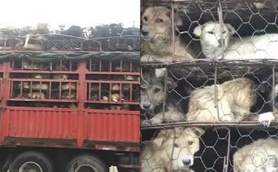 Sám sa postavil pred kamión a zachránil tak tisíc ukradnutých psov a mačiek. Ak by ho nebolo, Číňania by ich naporcovali a zjedli