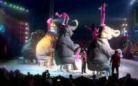 Šéf cirkusu Aleš: Ochranárov zvierat k nám pozývame, ale oni nechcú prísť. Aj tak vyhlasujú, že ich týrame
