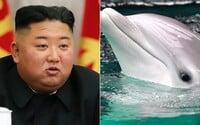 Severní Korea chce údajně vycvičit bojové delfíny. Militarizaci mají dokazovat fotky