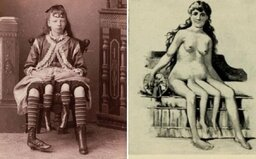 Sex preferovala cez pravý pohlavný orgán, otehotnela ale cez ľavý. Štvornohá Myrtle premenila svoj hendikep na peniaze