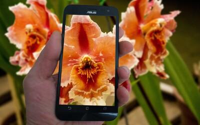 Shazam pro flóru: Česká aplikace rozpozná 8 tisíc rostlin jen podle pořízené fotky