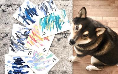 Shiba maluje obrazy. Jeden stojí 65 dolarů a lidi si můžou urvat ruce