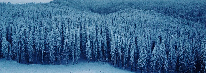 Sibír sa opäť odhaľuje. Vedci našli pozostatky levíčat starých vyše 10 000 rokov