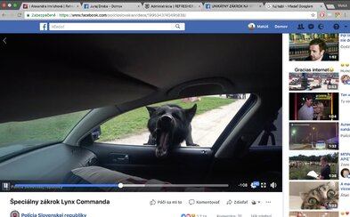 Šikovný policajný pes dokáže naskočiť cez okno do auta a zneškodniť útočníka. Video policajného zboru zobrazuje zviera v akcii