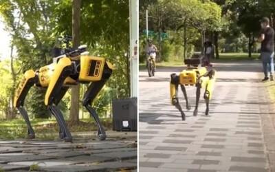 Singapurský park kontroluje robotický pes, ľudí upozorňuje na dodržiavanie rozostupov