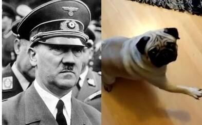 Škót možno poputuje do väzenia za to, že svojho psa naučil hajlovať. Za nevhodné video mu hrozí až 6 mesiacov za mrežami