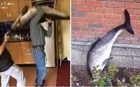 Skupina studentů vyhodila delfína oknem. Mrtvé tělo ležící na ulici našli až kolemjdoucí
