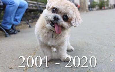 Slavná fenka Marnie zemřela. Na Instagramu ji sledovaly téměř 2 miliony lidí