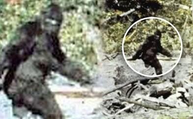Slávne video údajne zachytávajúce Bigfoota vzbudzuje dohady aj dnes. Ako vlastne vzniklo a existuje tento záhadný tvor?