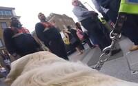 Slepý muž připevnil na svého psa GoPro, aby zachytil otřesné chování lidí. Nadávají mu a ignorují ho, když potřebuje pomoct